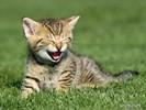 0.cats_31[1].jpg